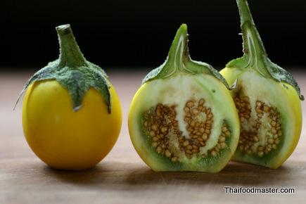 Ca trai vang hay Ca tau   Solanum xanthocarpum Schrad Wendl